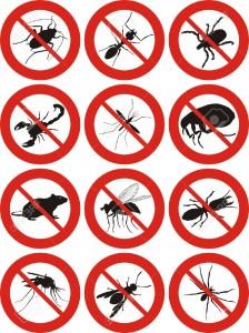 شركة,مكافحة,الحشرات,بينبع