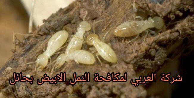 طرق القضاء علي النمل الأبيض