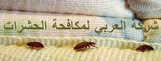 أسباب ظهور وانتشار الحشرات
