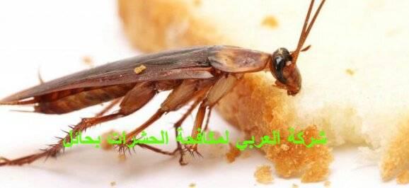 اقتراحات للتخلص من الحشرات الضارة