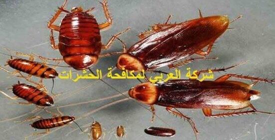 بعض الطرق السهله للتخلص من الحشرات