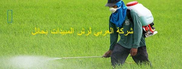 شركه العربي لرش المبيدات بحائل