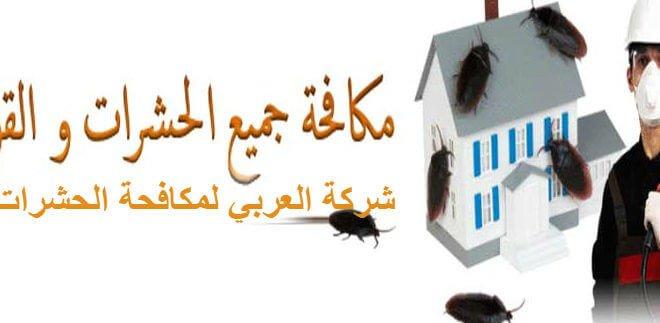 عوامل ظهور الحشرات في المنزل