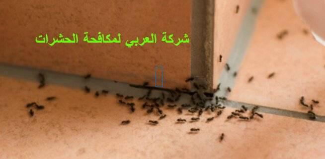 أماكن تجمع الحشرات في المنزل