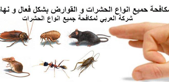 اضرار تواجد الحشرات في المنزل