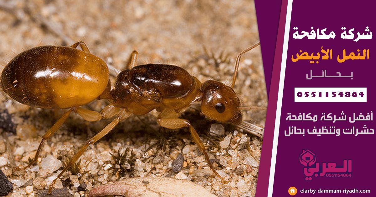 شركة مكافحة النمل الابيض بحائل - مكافحة حشرات بحائل