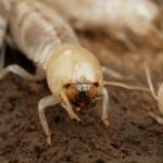 شركة مكافحة النمل الابيض بحائل 0551154864 – 0531459153