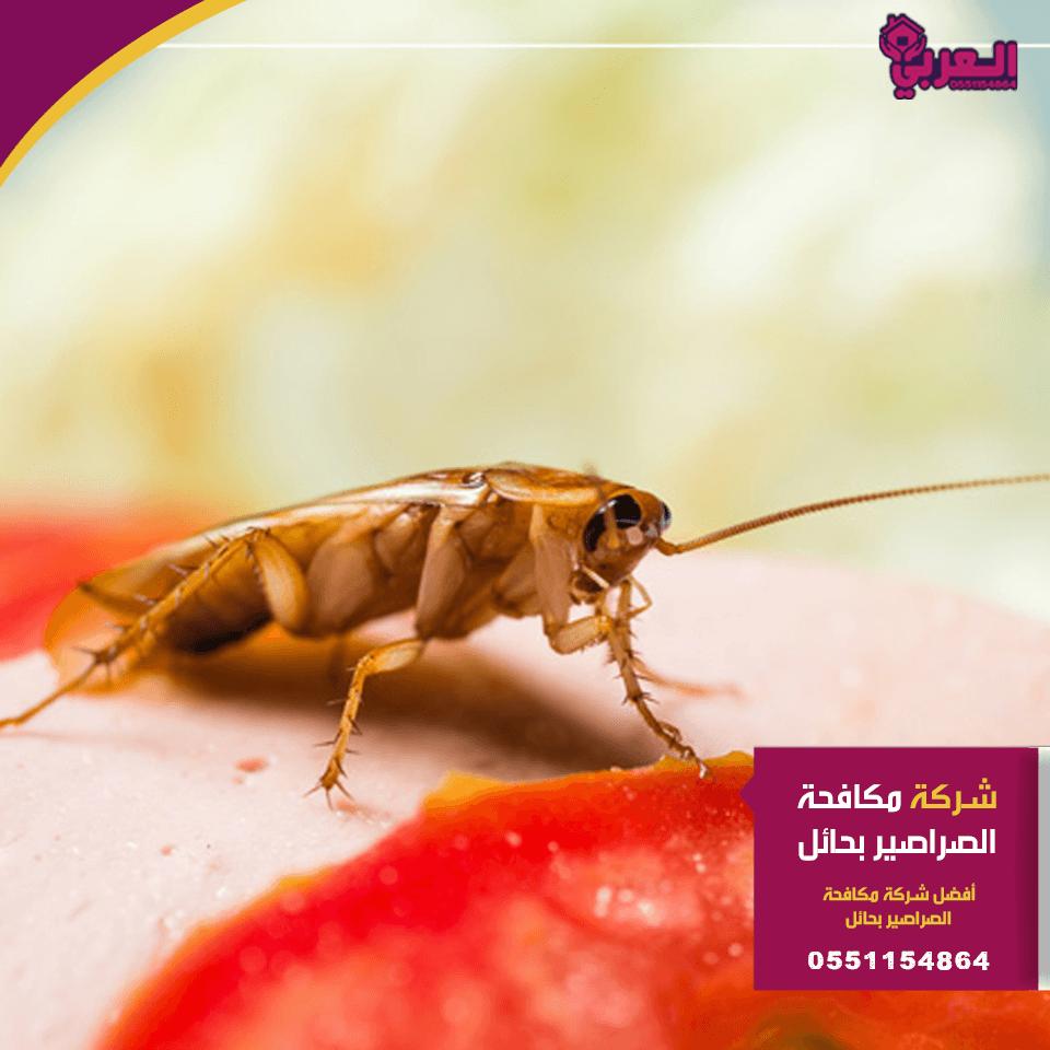 شركة مكافحة صراصير بحائل 1 - شركة مكافحة صراصير بحائل - 0551154864 - مكافحة حشرات