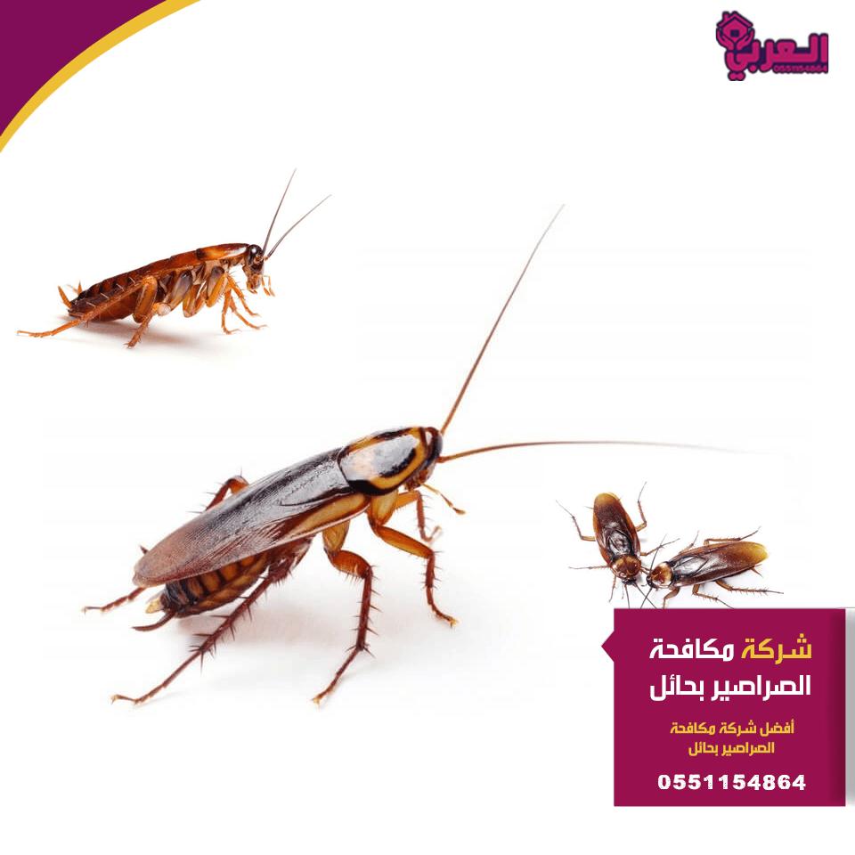شركة مكافحة صراصير بحائل 2 - شركة مكافحة صراصير بحائل - 0551154864 - مكافحة حشرات