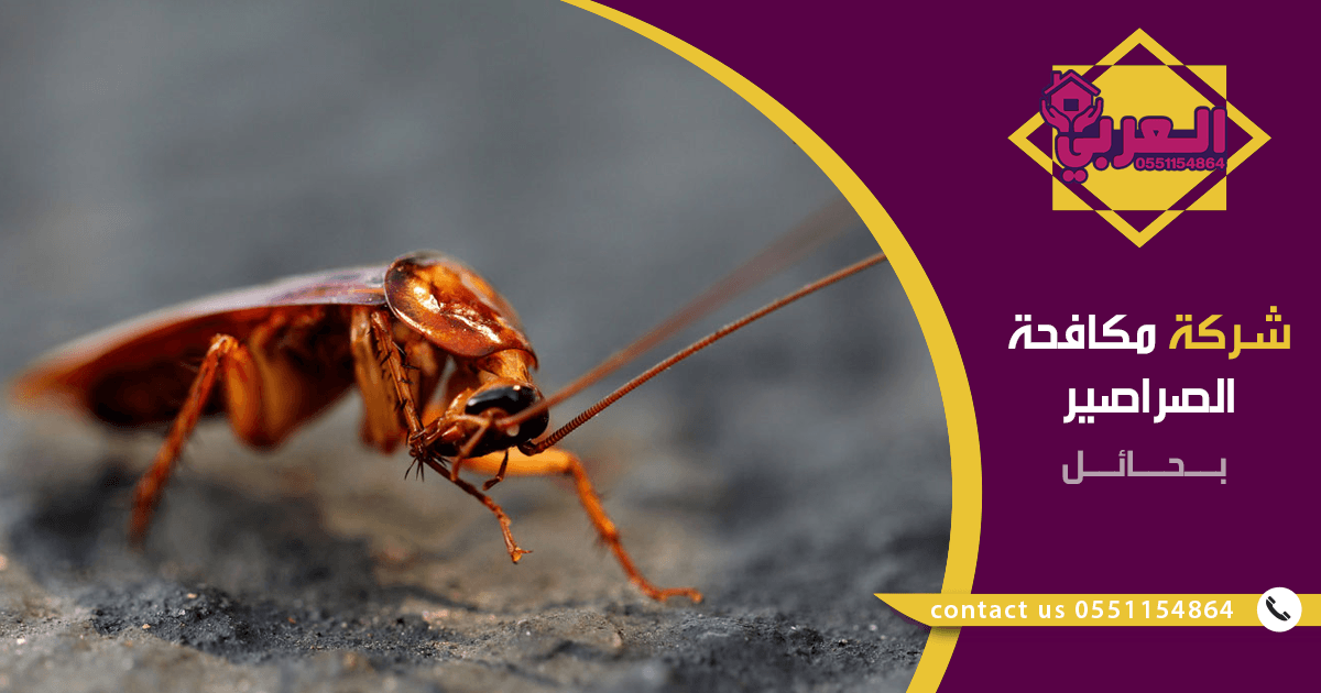 شركة مكافحة صراصير بحائل - مكافحة حشرات بحائل