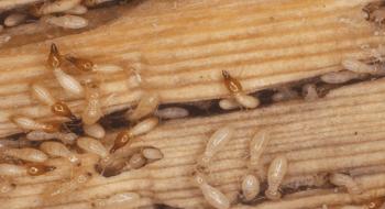 طرق التخلص من النمل الابيض في المنزل
