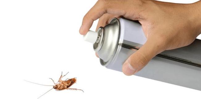 شركة مكافحة صراصير بحائل
