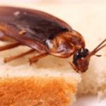 طرق التخلص من صراصير المنزل