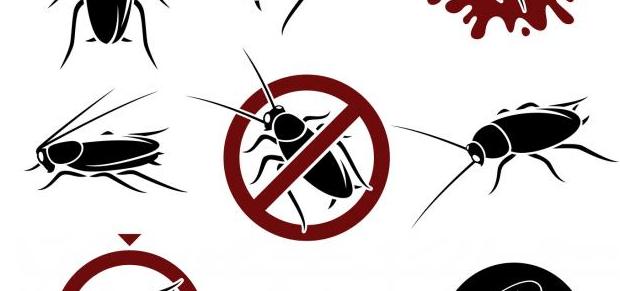 مكافحة الحشرات المنزلية دون رجعة