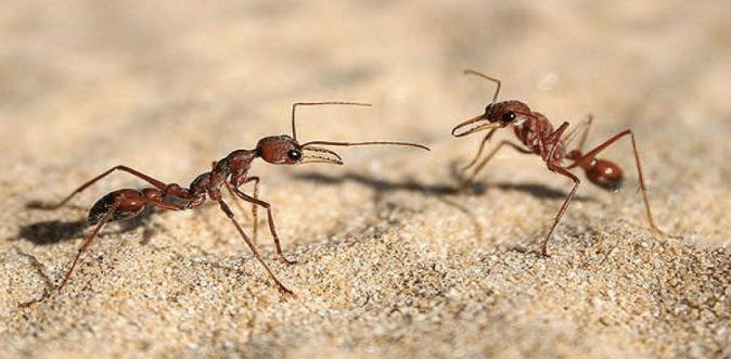 طرق القضاء على النمل نهائيا