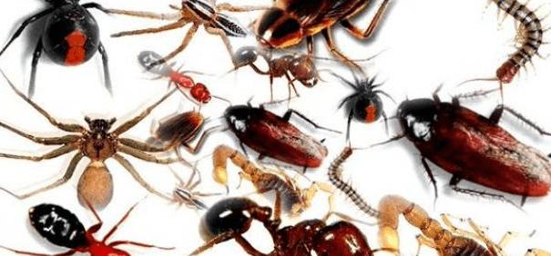 القضاء على حشرات المنزل