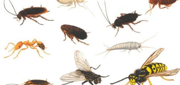 التخلص من الحشرات المنزلية بكل أنواعها