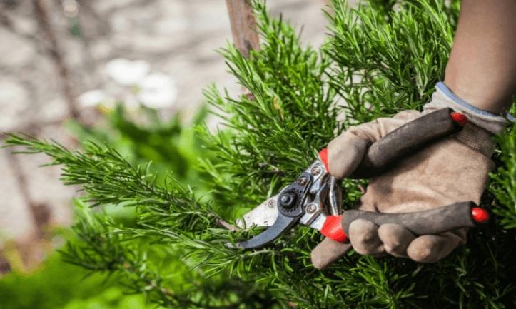 شركة قص أشجار بالرياض