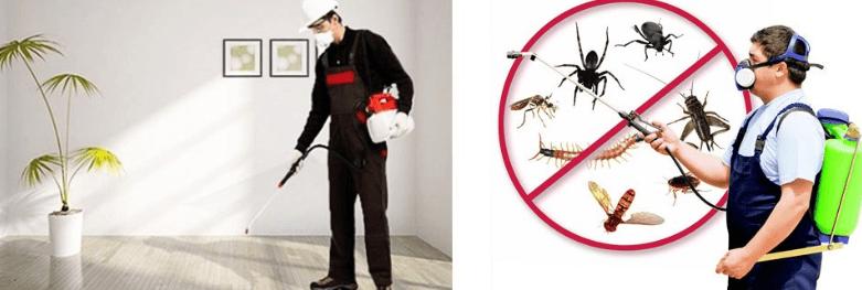 كيف اقضي على الحشرات الصغيره في المنزل
