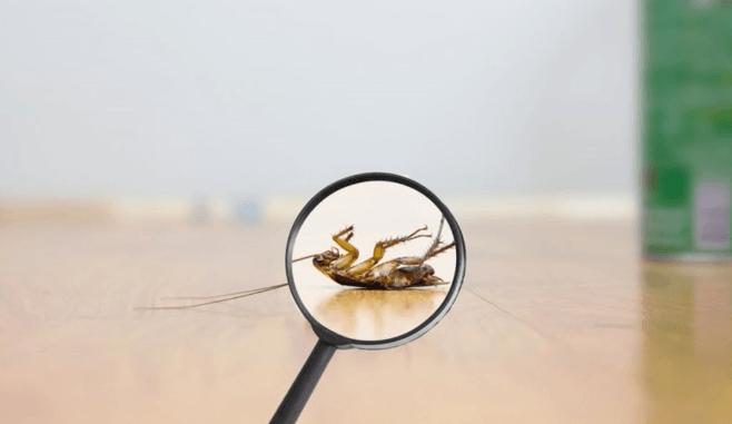 الحشرات الصغيرة