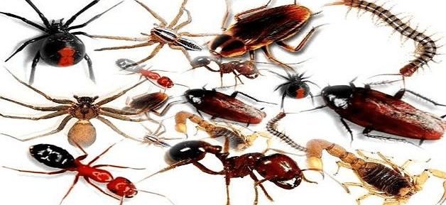 طرق القضاء على الحشرات
