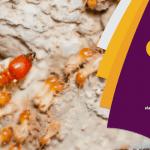 شركة مكافحة النمل الابيض بحفر الباطن  – 0552658926 رش دفان
