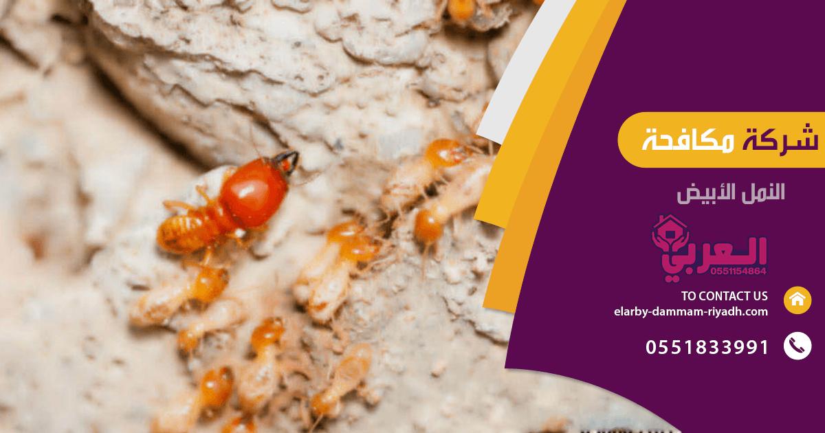 شركة مكافحة النمل الابيض بحفر الباطن - مكافحة حشرات بحفر الباطن