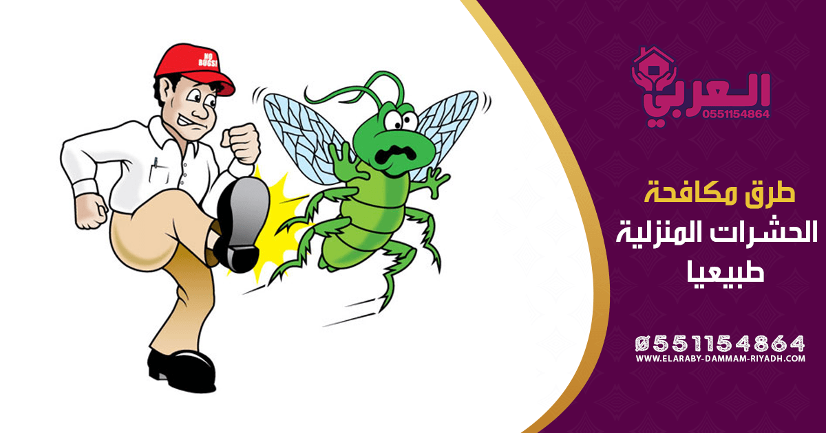 طرق مكافحة الحشرات المنزلية طبيعيا - شركة مكافحة حشرات بحائل