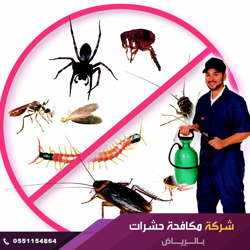 شركة مكافحة حشرات بالرياض - شركة رش حشرات بالرياض