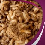 شركة مكافحة حشرات بالرياض النمل الابيض – 0557032280 – شركة مكافحة النمل الابيض بالرياض