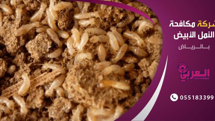 شركة مكافحة حشرات بالرياض النمل الابيض