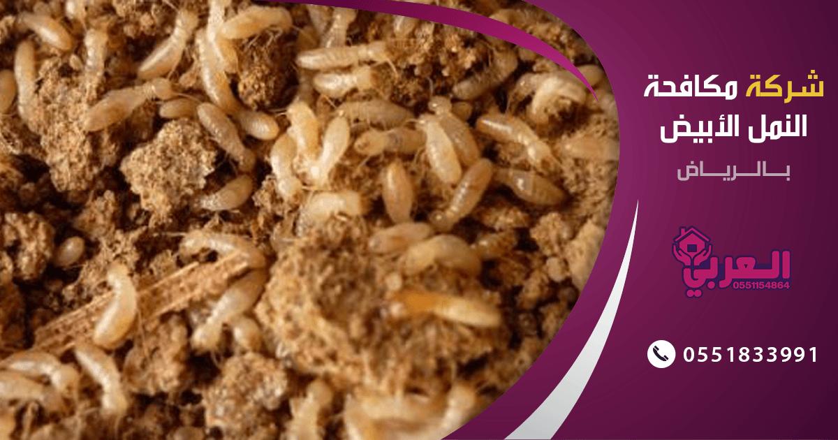 شركة مكافحة النمل الابيض بالرياض – 0557032280 – مكافحة حشرات