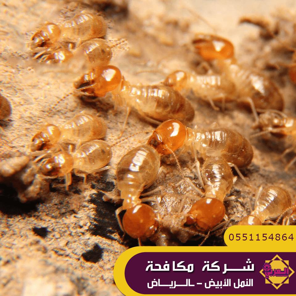 شركة مكافحة النمل الابيض بالرياض - شركة رش مبيد بالرياض