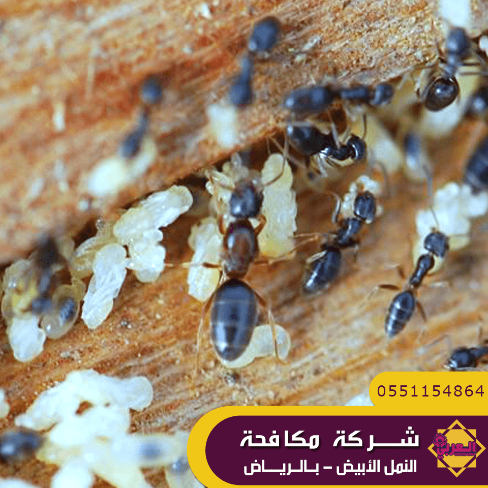 شركة مكافحة حشرات وسط الرياض