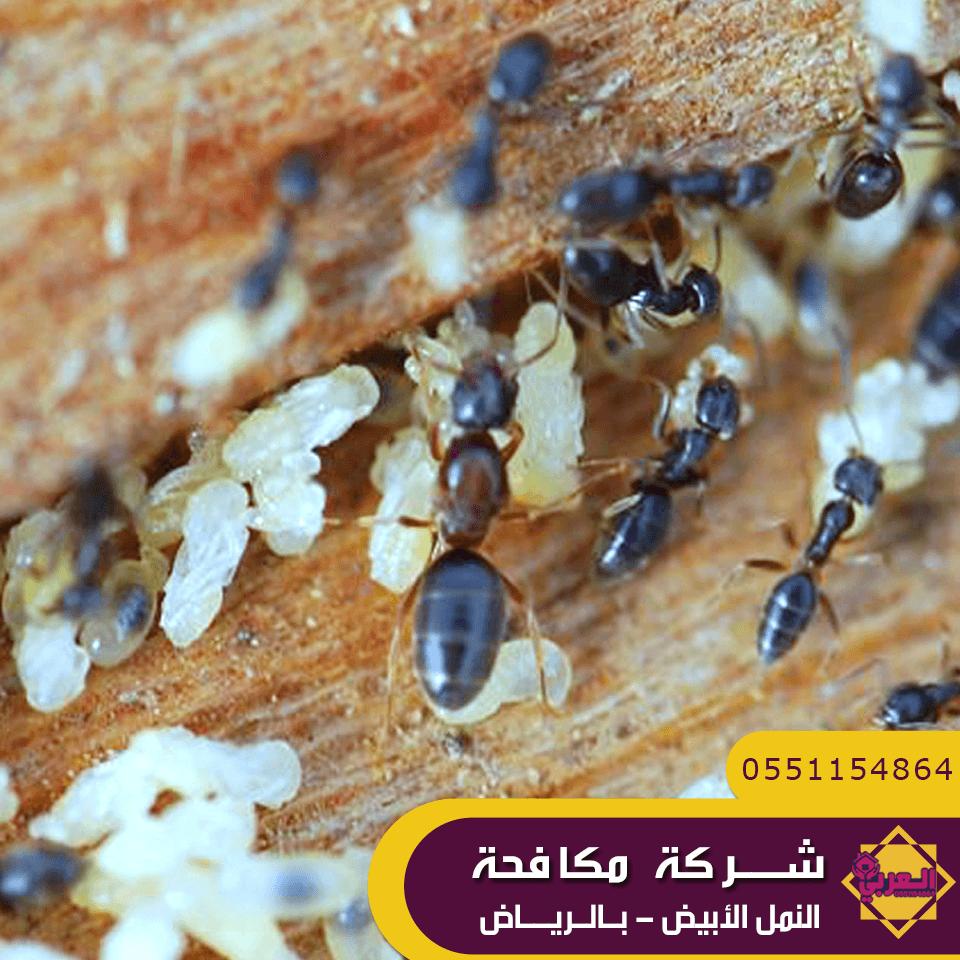 شركة مكافحة النمل الابيض بالرياض - شركة مكافحة حشرات بالرياض