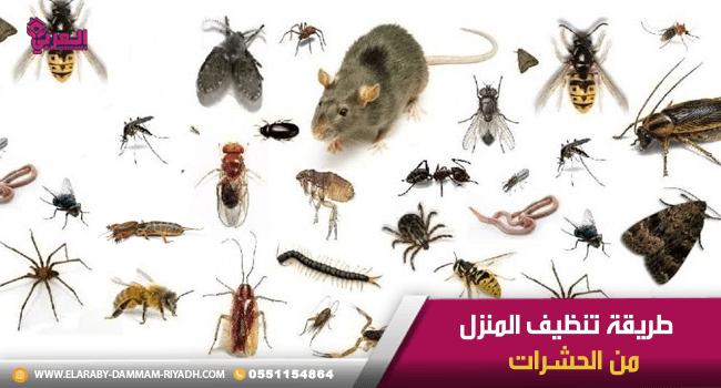 تنظيف المنزل من الحشرات