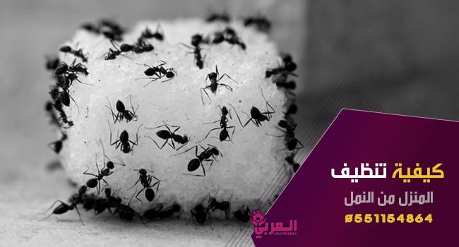 كيفية تنظيف المنزل من النمل - طريقة تنظيف المنزل من الحشرات ( النمل - الصراصير - الذباب )