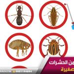 كيفية التخلص من الحشرات الطائرة الصغيرة – شركة مكافحة حشرات بحائل