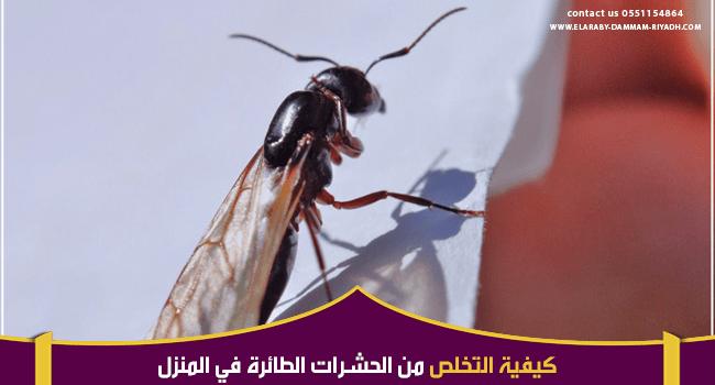 طرق مكافحة الحشرات الطائرة في المنزل